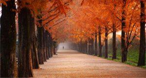 Itt van az ősz, itt van…mitől oly szerethető a vénasszonyok nyara?